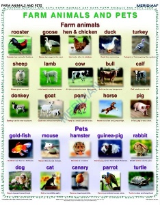 Farm animals and pets